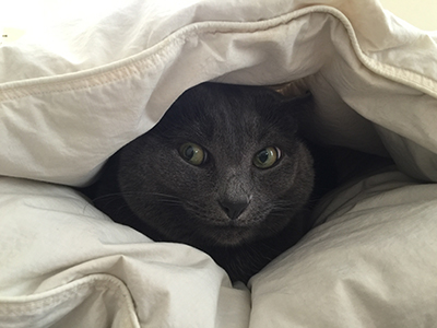 Trixie hiding under the comforter